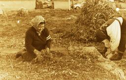 昭和51年農作業風景