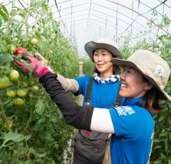 トマト生産者 ぼちぼち農場 荒木千夏さん 川野美香さん
